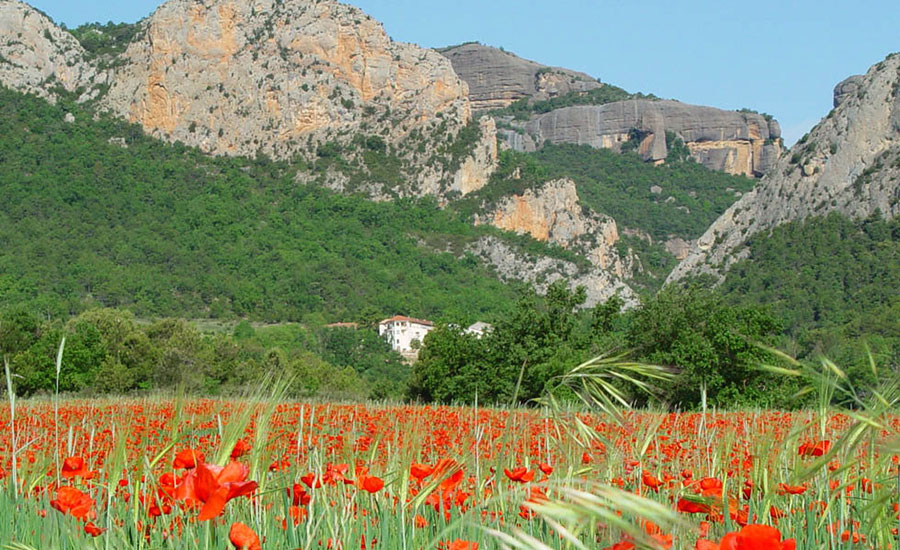 Among-poppies-forest-and-mountains-Alt-Urgell_destino_2